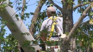 Autorização para cortar árvores em terrenos particulares.