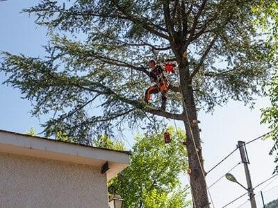 Cuidado de árboles