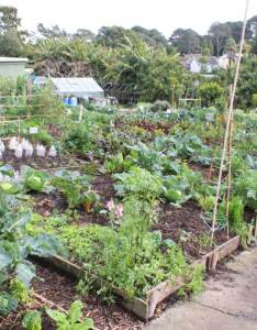 Crop rotation works well by general guidelines many of the separated groups will work when mixed and grown alongside or amongst each other also pod easy edible gardening rh podgardening