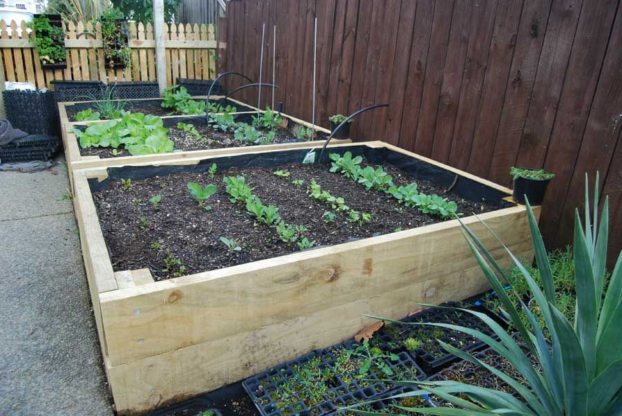 Building Raised Vege Garden
