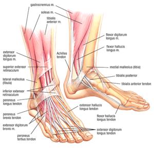 Podiatric Associates Foot & Ankle Center | Illustrations in Pembroke Pines