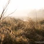Słońce przebija się przez mgły