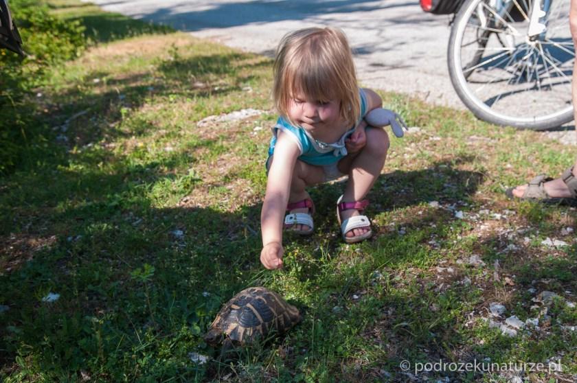 Ala znajduje na poboczu żółwia