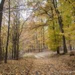 Lasami, ile się da