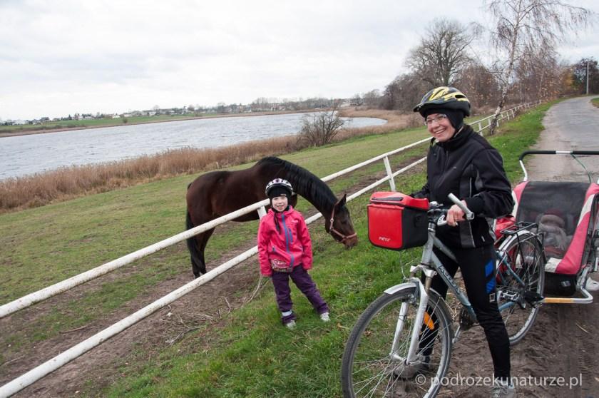 Konie nad jeziorem Witobelskim