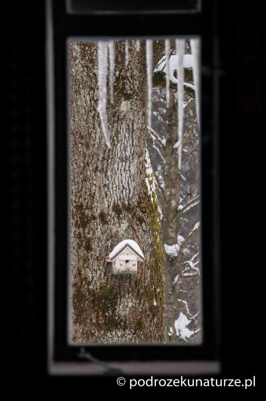 Widok z okna naszej bazy