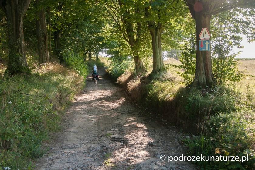 Na trasie pomiędzy Brodnicą i Golubiem Dobrzyniem