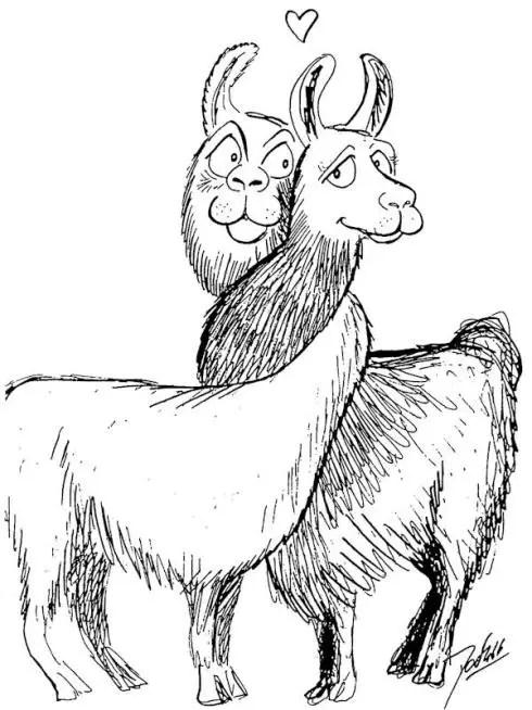 Llama Poems