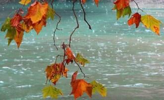О чём шелестят листья?
