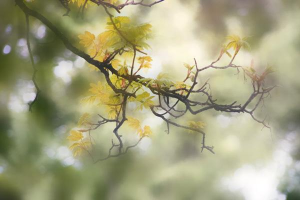 Healing Words, Branch - Gil Dekel