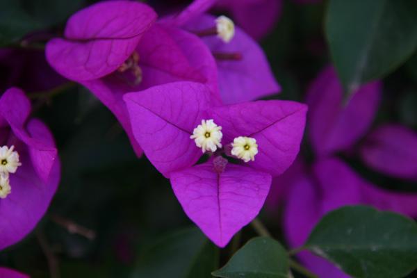 Purple Nature - Photo by Gil Dekel.