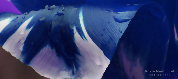 Blue-Nemsis-Gil-Dekel