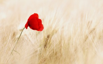 cereals-red-flower