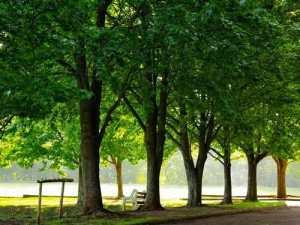 park-bench