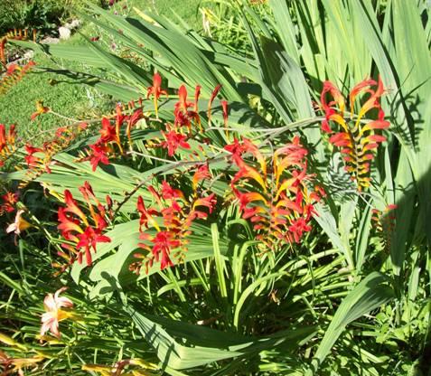Sue  Daves Garden