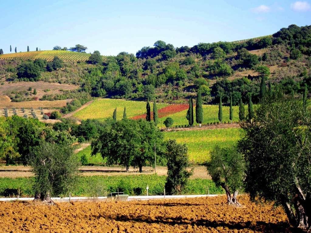 Surrounding area  Poggio Cavalla