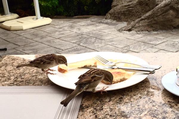 Birds at Hyatt Regency Thessaloniki Ambrosia Restaurant
