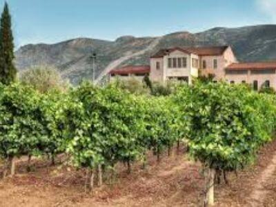 Dereskos Domaine   Peloponnese wines   The Vineyards of Peloponnese   Peloponnese Wine Region   Peloponnese Wine Roads   Wines and Grape Varieties of Peloponnese   Peloponnese wineries   Wines from the Peloponnese