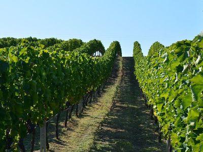 Kokkalis Estate | Peloponnese wines | The Vineyards of Peloponnese | Peloponnese Wine Region | Peloponnese Wine Roads | Wines and Grape Varieties of Peloponnese | Peloponnese wineries | Wines from the Peloponnese