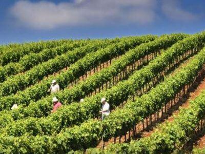 Konstantinos Winery   Peloponnese wines   The Vineyards of Peloponnese   Peloponnese Wine Region   Peloponnese Wine Roads   Wines and Grape Varieties of Peloponnese   Peloponnese wineries   Wines from the Peloponnese