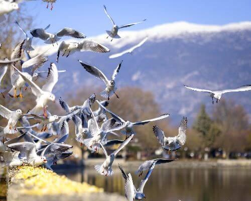 Ioaninna seagulls | Western Greece | Epirus