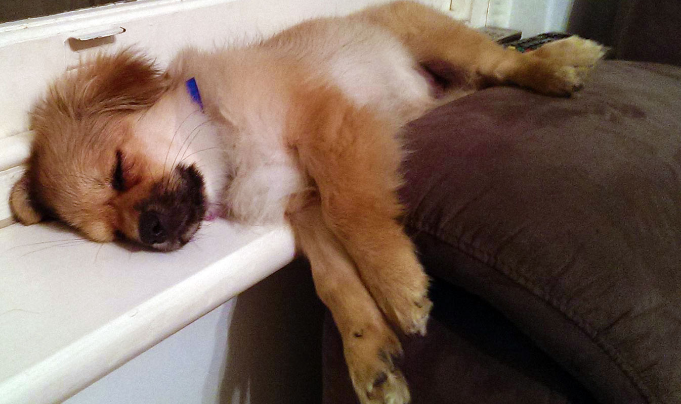 10 Lazy Dog Breeds Perfect For Apartment Living Point Ruston