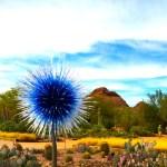 La Mariposa:  The Butterfly Invasion of Scottsdale, AZ