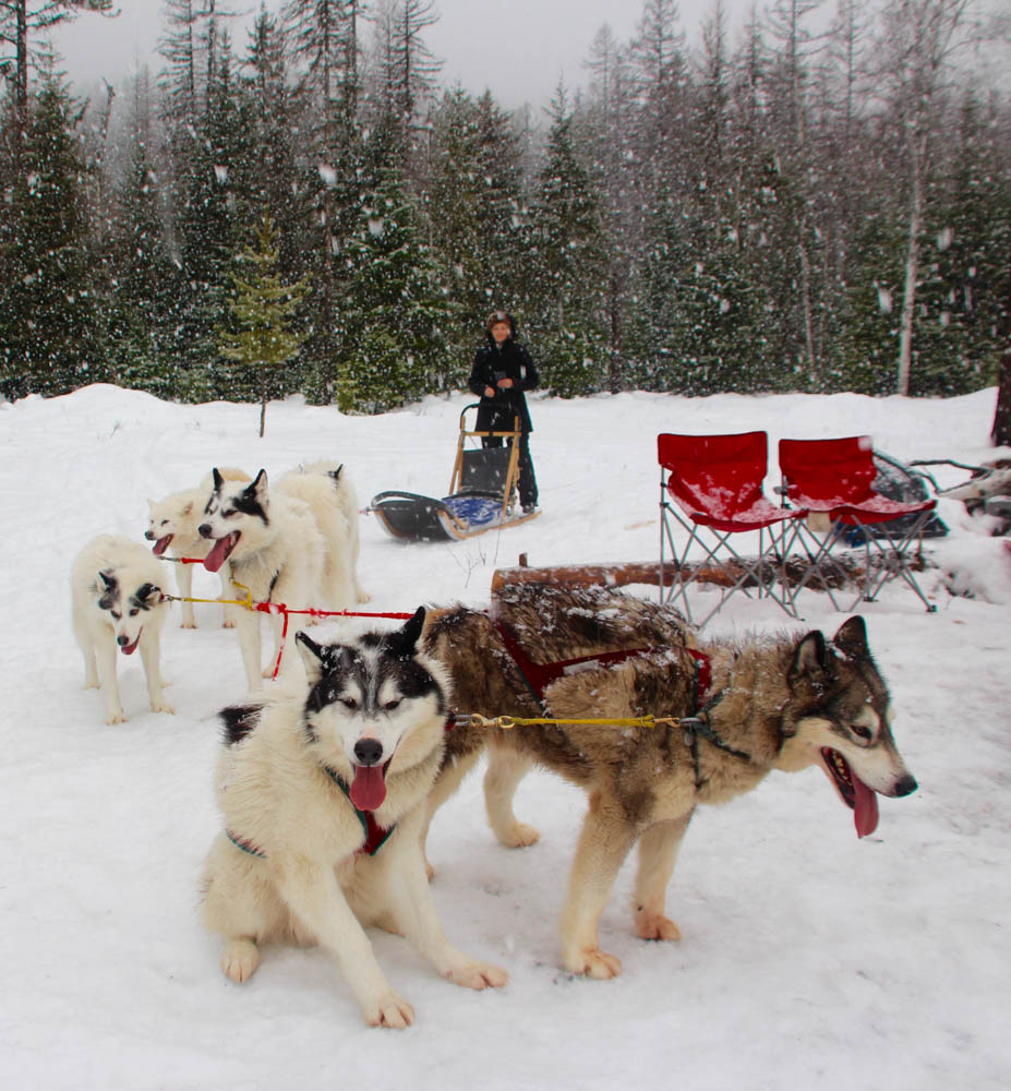Tall Tales: Dog Sledding in Montana