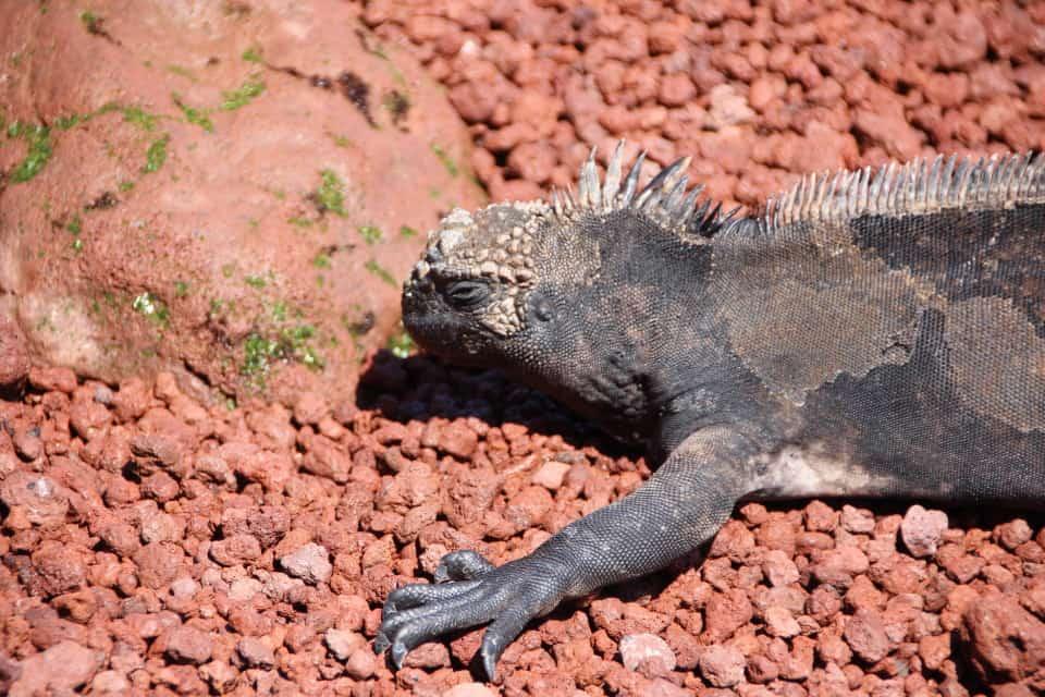 The Galapagos Islands, Galapagos holidays, Galapagos Islands Holidays, Galapagos Islands facts, Tour a Galapagos, Galapagos islands map