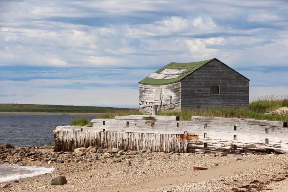beluga whales, churchill canada, churchill manitoba, artic adventures, baluga