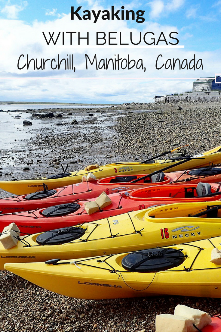 Come along with me as I kayak with Beluga Whales in Manitoba, Canada