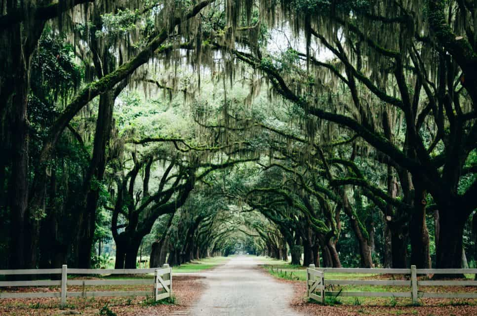 Moss covered oaks, Things to do in Savannah, Things to do in Savannah, GA, things to do in Savannah
