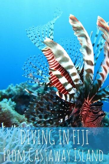 Diving in Fiji is fun!