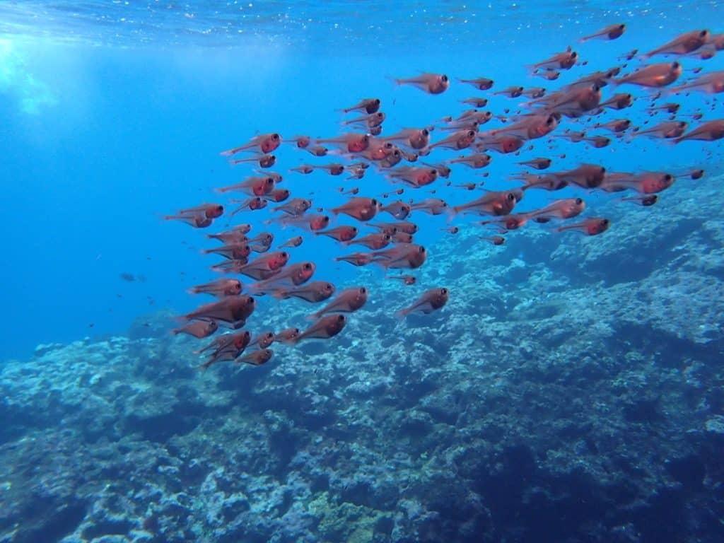 Tonga Tourism, Tongan Food, Nuku'alofa, things to do in Tonga, Tonga Food, Things to do Tonga, What to do in Tonga