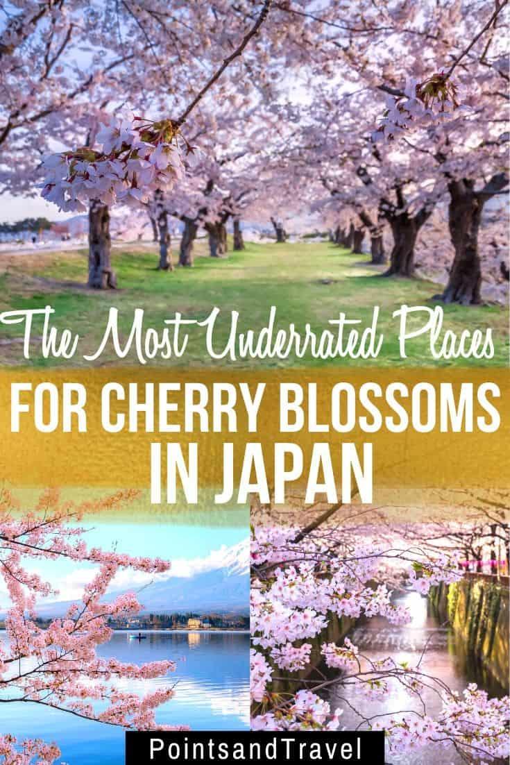 sakura bloom, sakura, cherry blossom festival, Japanese cherry blossom tree, 6 secret spots for sakura in japan, the most underrated places for cherry blossoms in Japan,