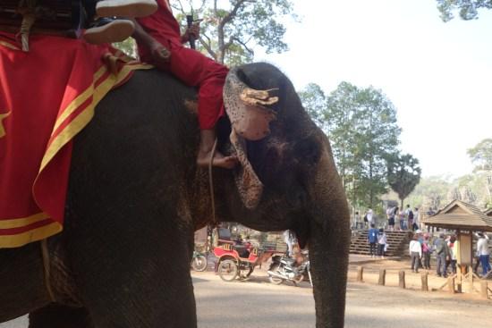 angkor thom bayon faces temple elephants
