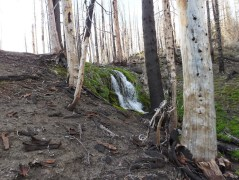 A beautiful alpine cascade amongst the burnt, dead trees. A hint of what this place must have been like before the fire.