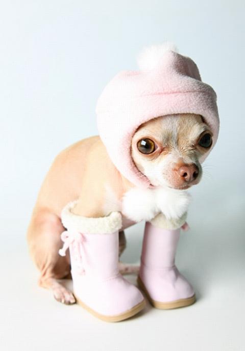 I am de officials boots on da ground imvestigators in China lookin fur bad treats n stuff