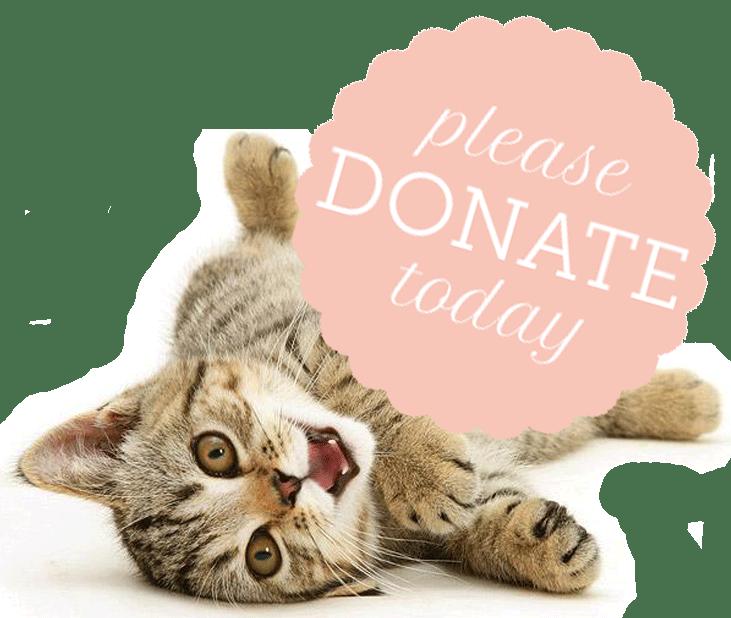 kitty-donate-button