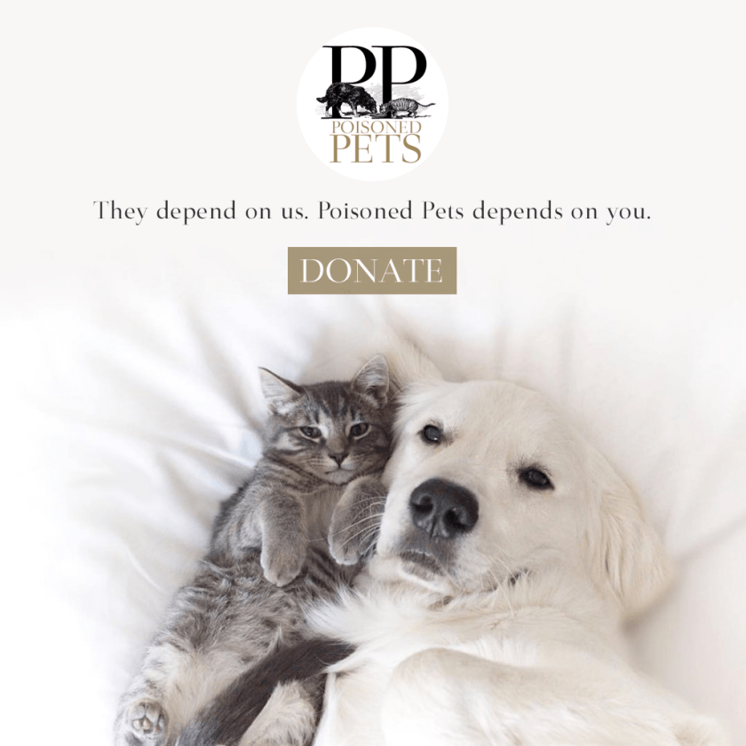 dog-and-cat-snuggle-poisoned-pets-donation-plea