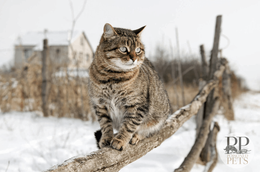 Cat_Outside_Snow