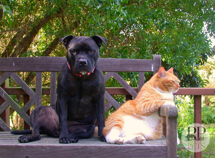 cat-and-dog-bffs