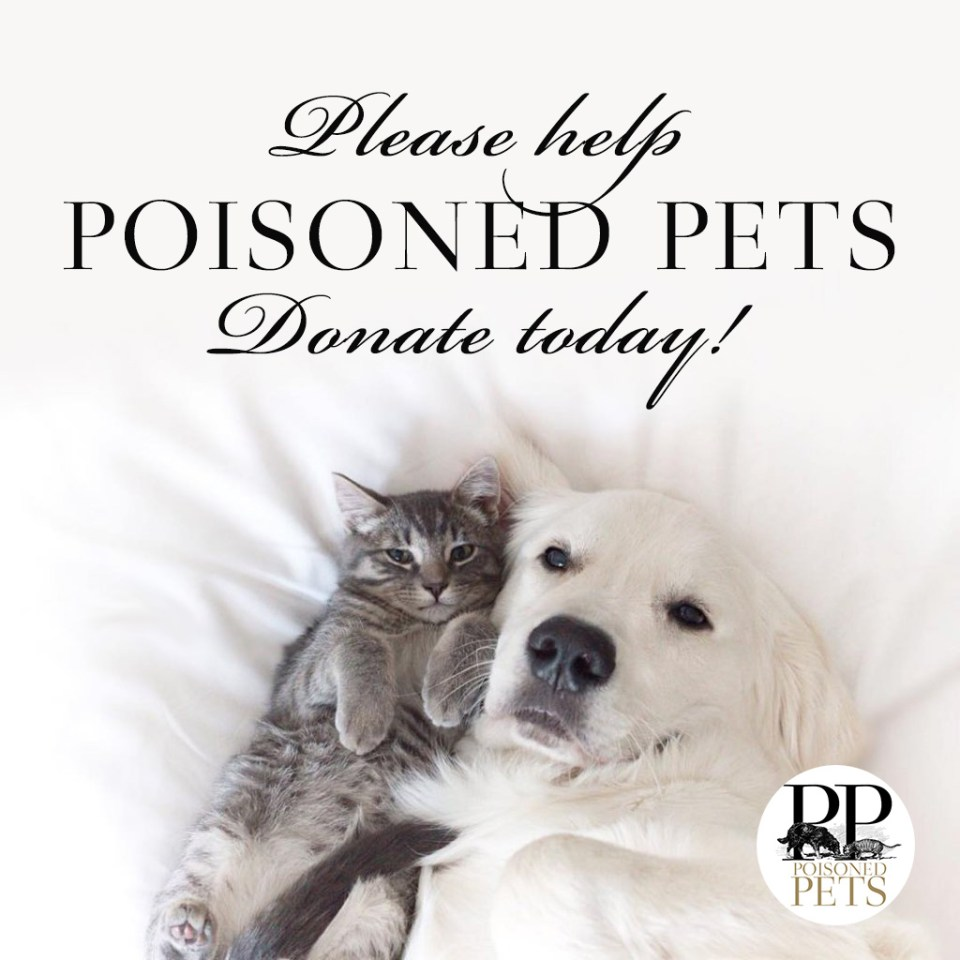poisoned pets pet food safety warnings news cats dogs