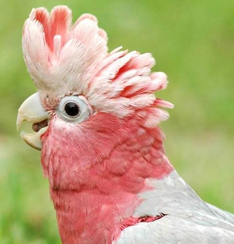 RECALL: ZuPreen FruitBlend Bird Foods Recalled for Dangerous Levels of Supplements