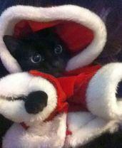 Santa Cat help