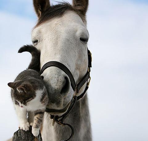 animals,cute,friends,love,photography,horse-cat
