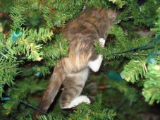 cat-climbing-in-a-christmas