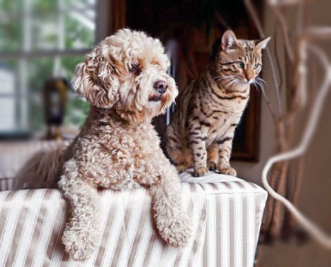 cat-&-dog-watching-and-waiting