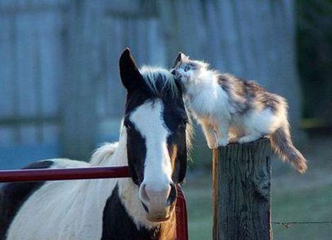 cat horse friends