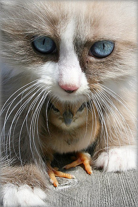 cute,bird,cat,eyes,kitten,pets-1a85ee58a6b194d35233a70f90ccc89f_h